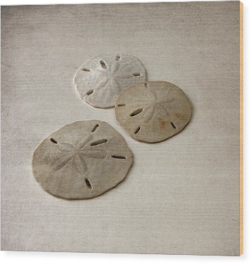 Gray Taupe And Beige Sand Dollars Wood Print by Brooke T Ryan