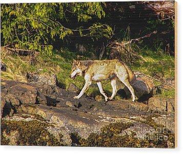 Gray Wolf Wood Print by Robert Bales