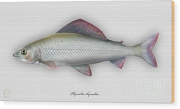Wood Print featuring the painting Grayling - Thymallus Thymallus - Ombre Commun - Harjus - Flyfishing - Trout Waters - Trout Creek by Urft Valley Art