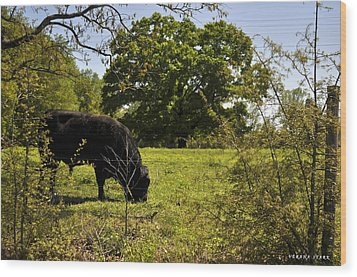 Grazing Alabama Wood Print