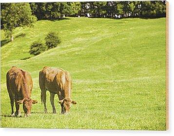 Grazing Cows Wood Print by Amanda Elwell