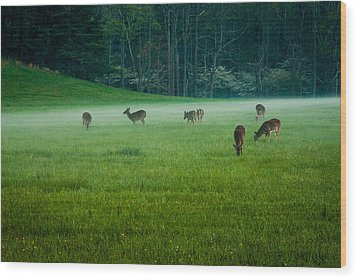 Grazing Deer Wood Print