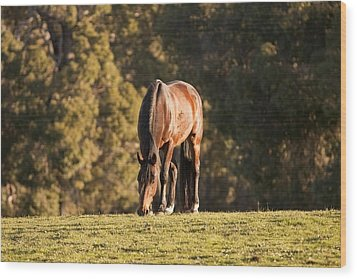 Grazing Horse At Sunset Wood Print by Michelle Wrighton