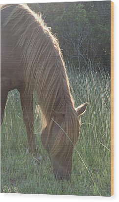 Grazing Horse Wood Print by Nancy Edwards