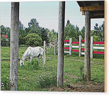 Grazing In The Meadow Wood Print by Dianne  Lacourciere