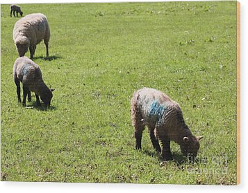 Grazing Wood Print by Vicki Spindler