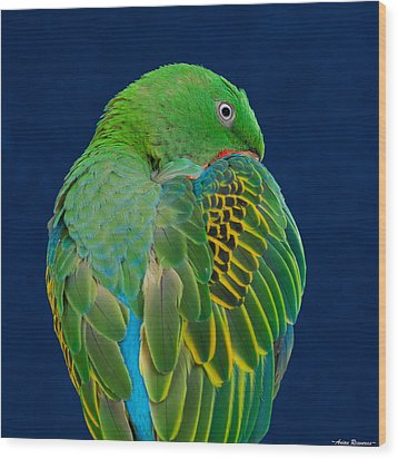 Wood Print featuring the photograph Great-billed Parrot 2 by Avian Resources