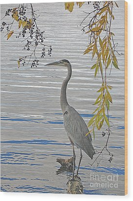 Wood Print featuring the photograph Great Blue Heron by Ann Horn