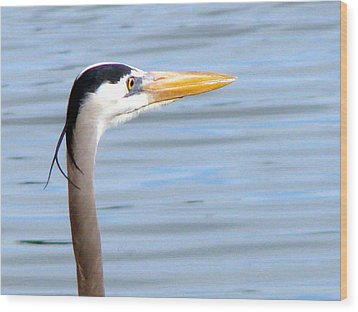 Wood Print featuring the photograph Great Blue Heron Breeding Profile by Linda Cox