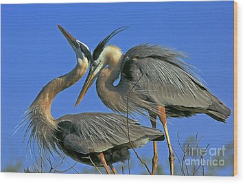 Great Blue Heron Courting Pair Wood Print by Larry Nieland