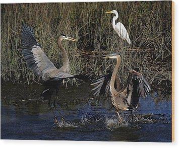 Great Blue Heron Courtship Wood Print by Paulette Thomas