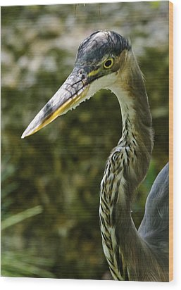 Wood Print featuring the photograph Great Blue Heron by Dee Dee  Whittle