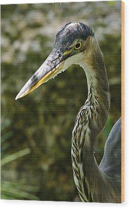 Great Blue Heron Wood Print by Dee Dee  Whittle