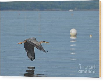 Great Blue Heron  Wood Print by DejaVu Designs