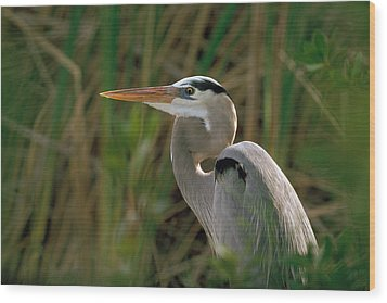 Wood Print featuring the photograph Great Blue Heron by Doug Herr