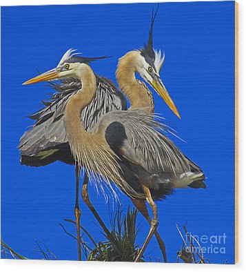 Great Blue Heron Family Wood Print by Larry Nieland