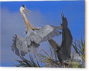Great Blue Heron Fight  Wood Print by Larry Nieland