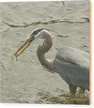 Wood Print featuring the photograph Great Blue Heron Fishing by Bob and Jan Shriner