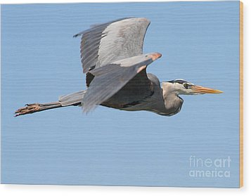 Wood Print featuring the photograph Great Blue Heron Flying by Bob and Jan Shriner