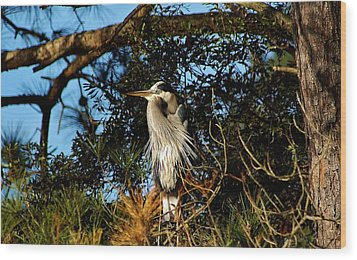 Great Blue Heron In A Tree - # 23 Wood Print by Paulette Thomas