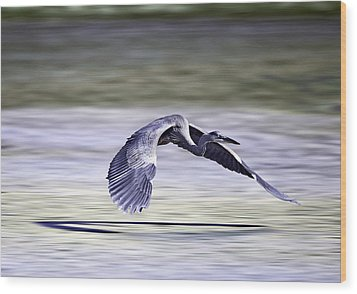 Wood Print featuring the photograph Great Blue Heron In Flight by John Haldane