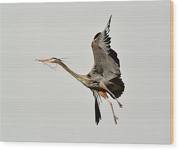 Great Blue Heron In Flight Wood Print by Kathy King