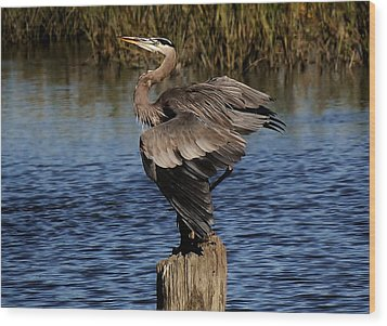 Great Blue Heron In The Marsh - # 17 Wood Print by Paulette Thomas