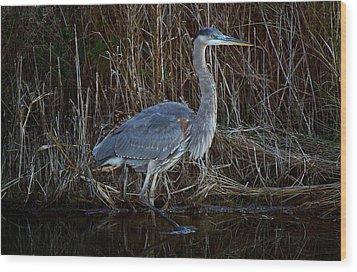 Great Blue Heron In The Marsh - #1 Wood Print by Paulette Thomas