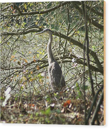 Wood Print featuring the photograph Great Blue Heron by Karen Silvestri