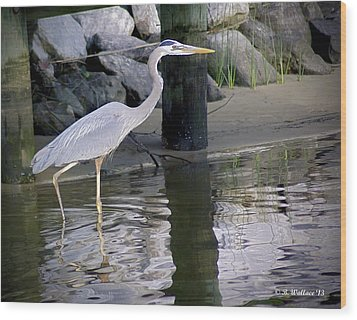 Great Blue Heron - Mealtime Wood Print by Brian Wallace