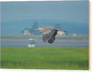 Great Blue Heron Wood Print by Nancy Landry