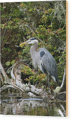 Great Blue Heron On Log Wood Print by Randall Ingalls