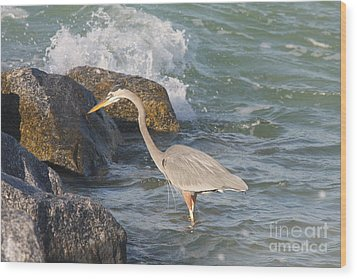 Wood Print featuring the photograph Great Blue Heron On The Prey by Christiane Schulze Art And Photography