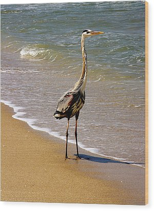 Great Blue Heron On The Surf. Wood Print
