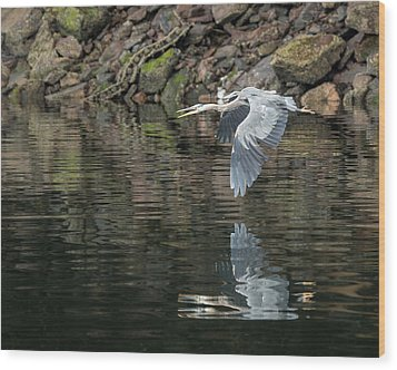 Great Blue Heron Reflections Wood Print by Jennifer Casey