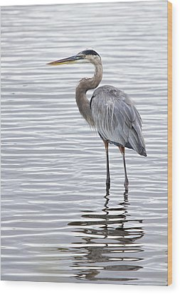 Great Blue Heron Standing In Water Wood Print
