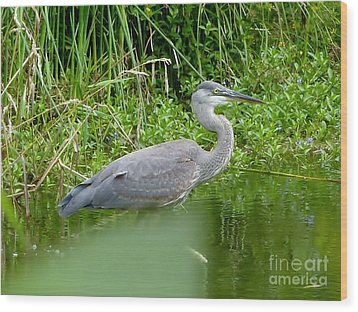 Wood Print featuring the photograph Great Blue Heron  by Susan Garren