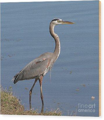 Great Blue Heron Wading Wood Print by Bob and Jan Shriner