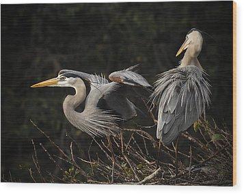 Great Blue Herons  Wood Print