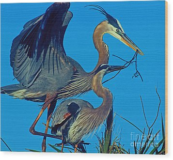 Great Blue Herons - Nest Building Wood Print by Larry Nieland
