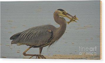 Great Blue Herron Eating Fish Wood Print