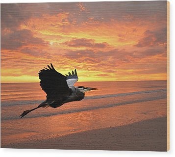Great Blue In Flight 5 Wood Print by Marty Koch