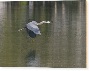 Great Blue Over Green Wood Print