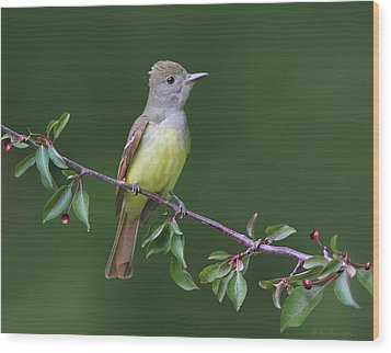 Great Crested Flycatcher Wood Print by Daniel Behm