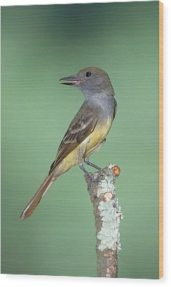 Great Crested Flycatcher Myiarchus Wood Print