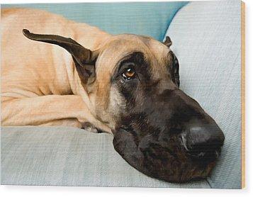 Great Dane Dog On Sofa Wood Print