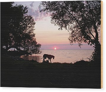 Wood Print featuring the photograph Great Dane Sunset by Aimee L Maher Photography and Art Visit ALMGallerydotcom