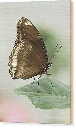 Great Eggfly Butterfly Wood Print by Judy Whitton