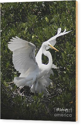 Great Egret 03 Wood Print by E B Schmidt