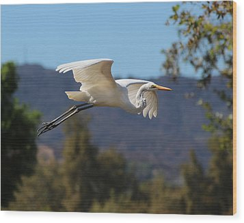 Great Egret 11x14 Wood Print